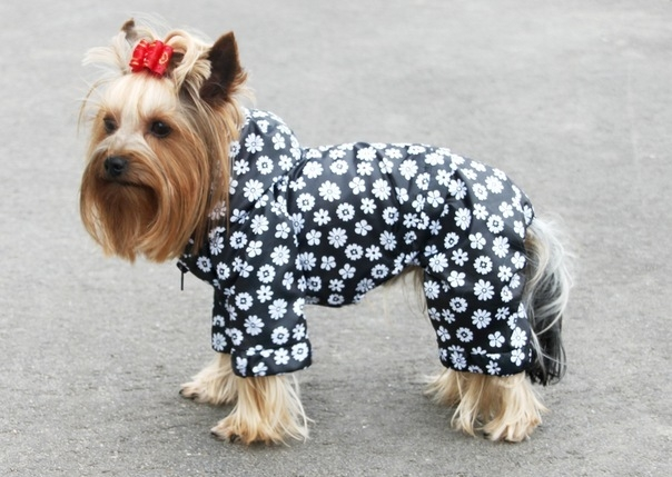 Собака одета в комбинезон