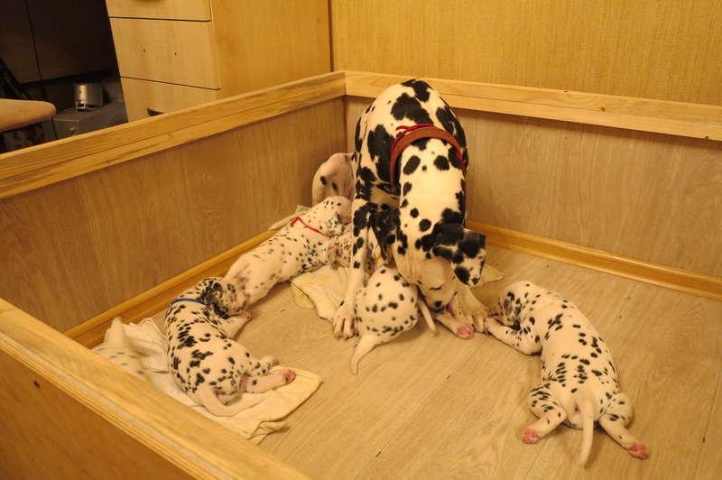 Манеж для собаки и ее щенков