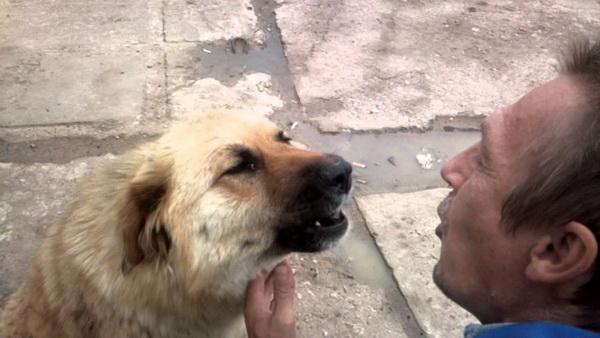 Пес подвывает человеку