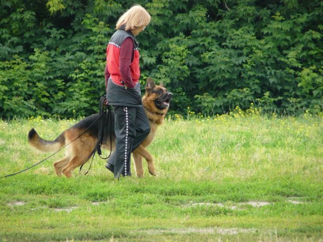Обучение собаки команде