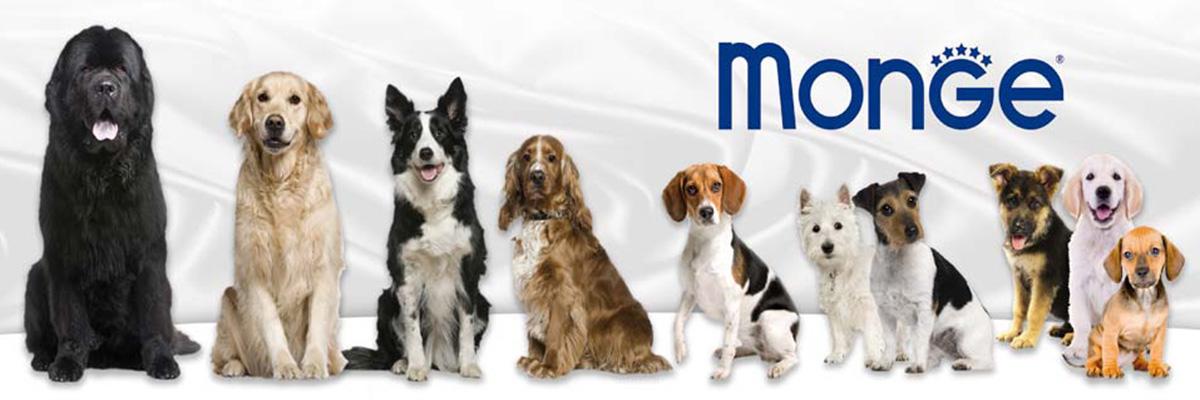 Собаки разных пород и размеров на фоне логотипа Monge