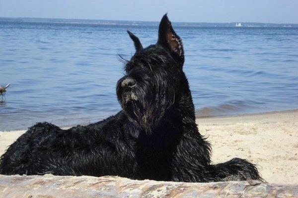 Собака возле моря