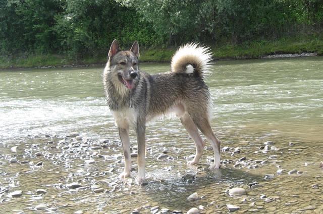 Собака гуляет возле речки