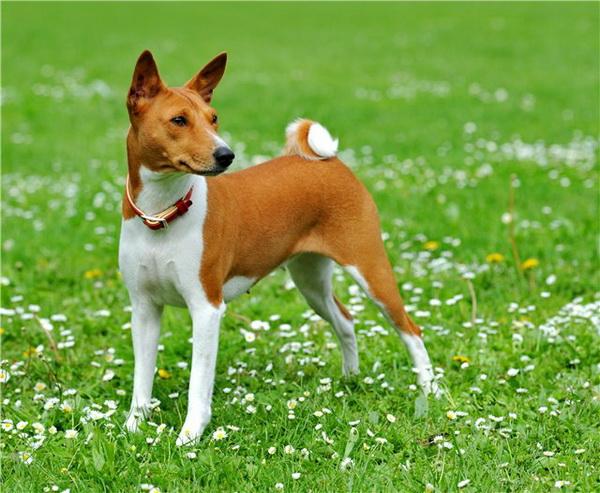Африканская собака на прогулке