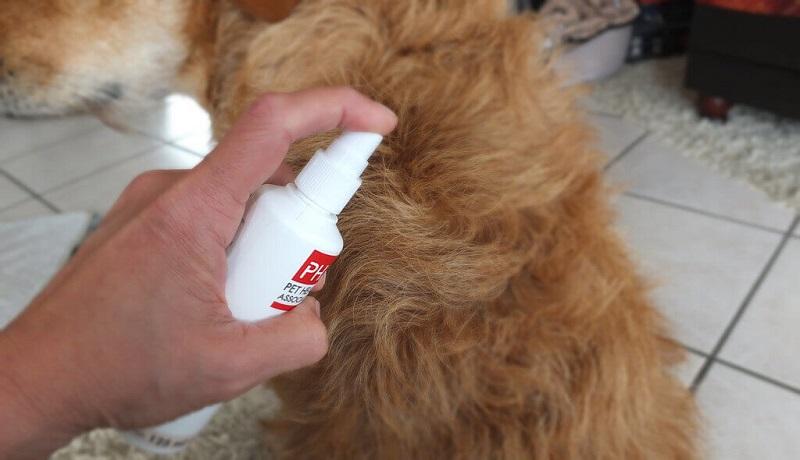 Обработка собаки средством