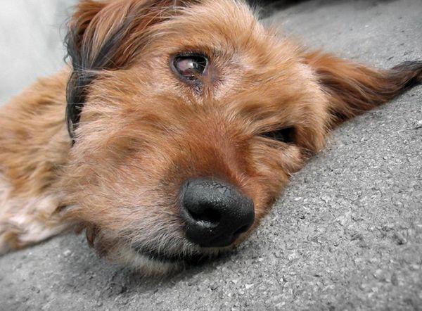 Собака на бетоне