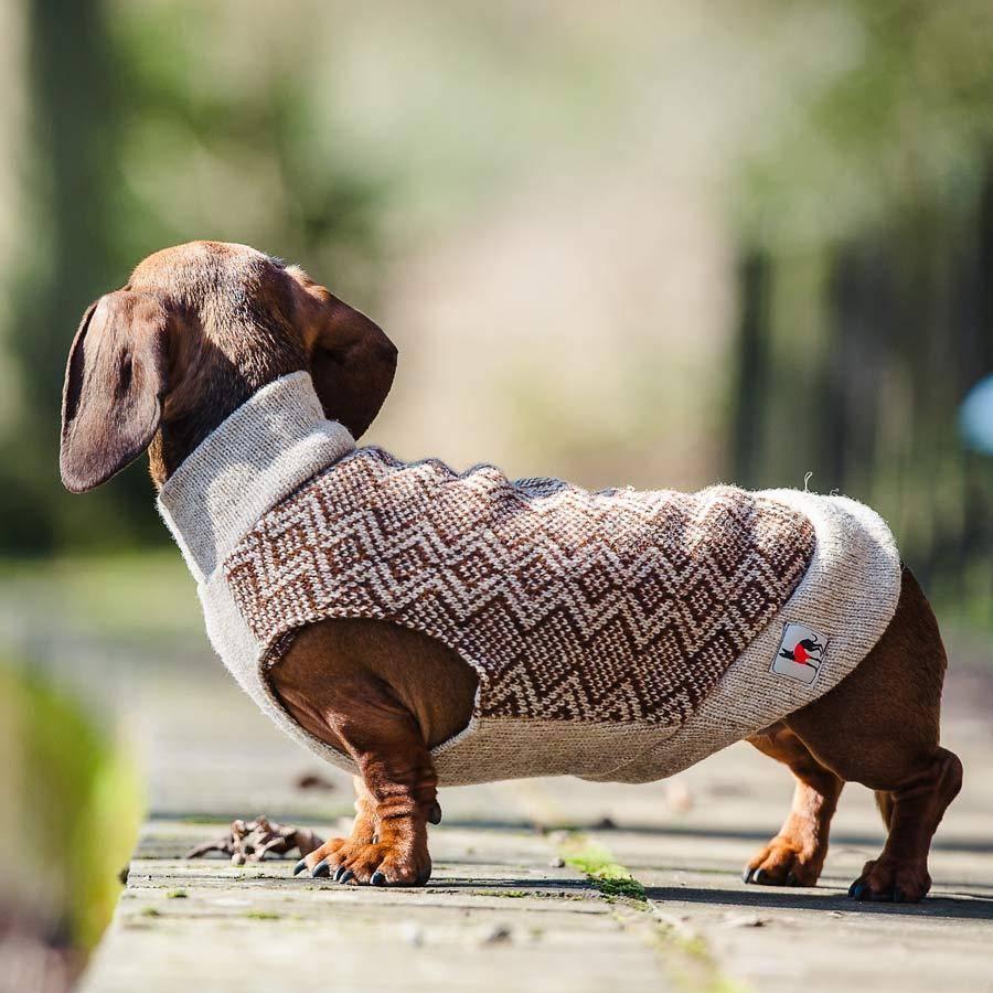 Такса в свитере с горловиной