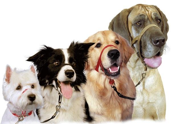 Собаки разного размера в ошейниках