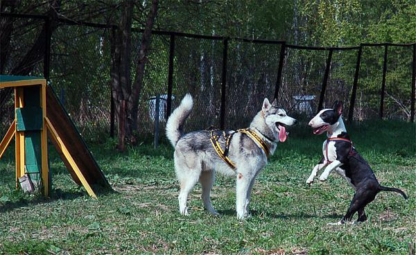 Друзья-собаки на площадке