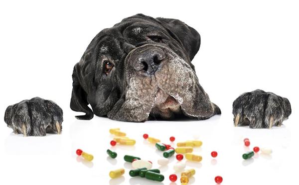 Грустная собака и таблетки