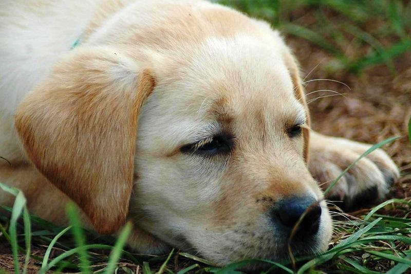 Полная аппатия у собачки