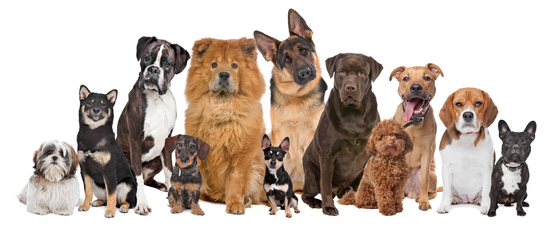 Собаки разных пород и размеров