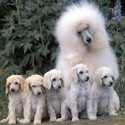 Собачка со щеночками