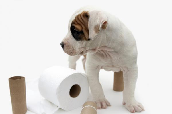 Щенок около рулона туалетной бумаги