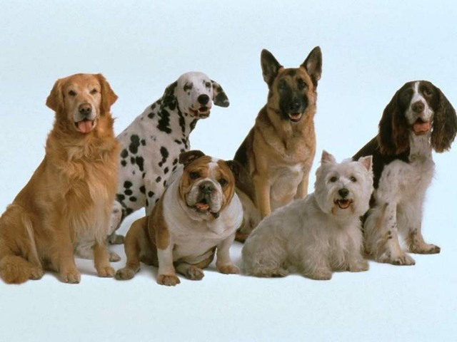Разные собаки на голубом фоне