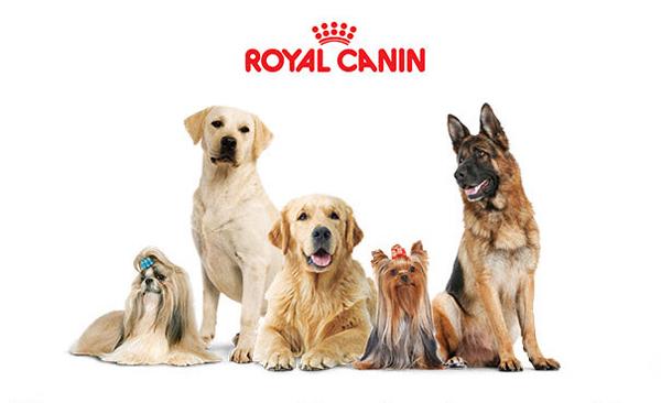 Собаки различных пород пол логотипом бренда