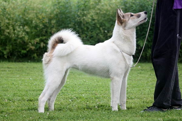 Собака с хозяином на прогулке