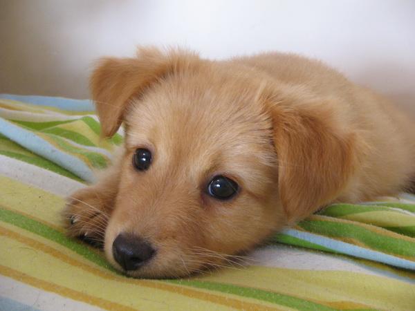 Милый щенок лежит