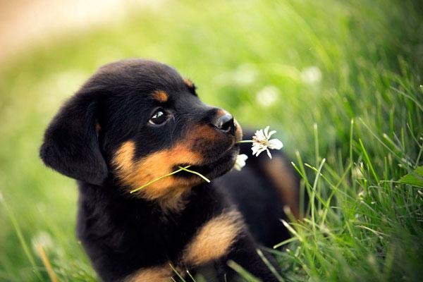 Маленький щенок в траве