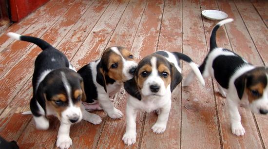 Маленькие щенки гуляют