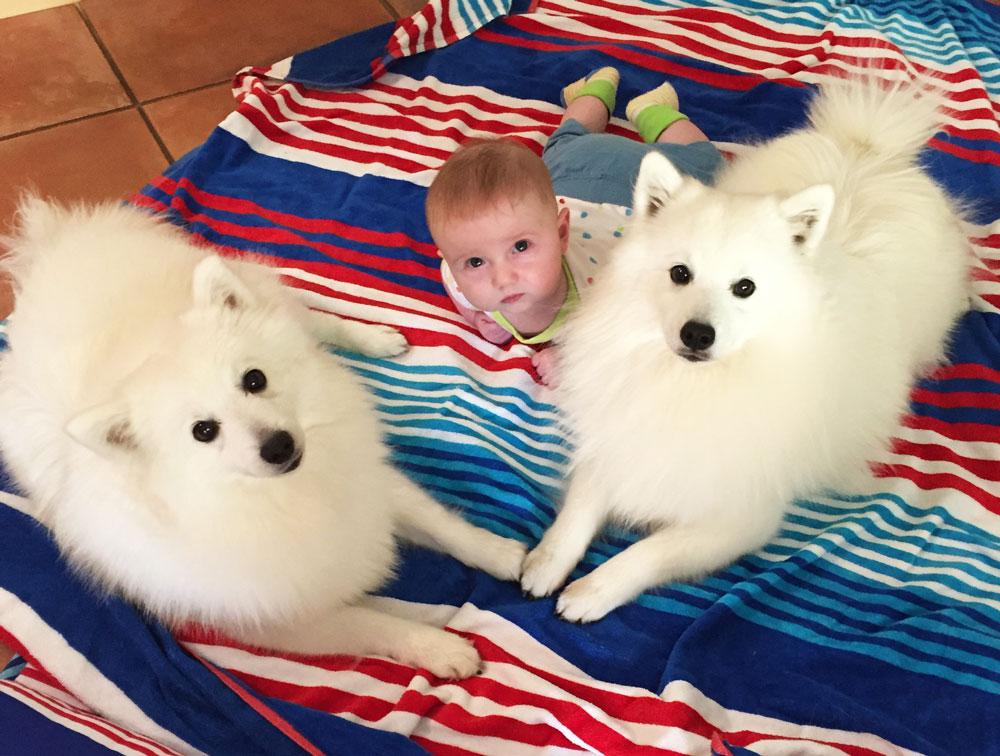 Два шпица и ребенок