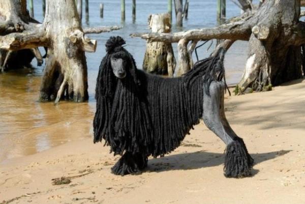 Шнуровой тип шерсти