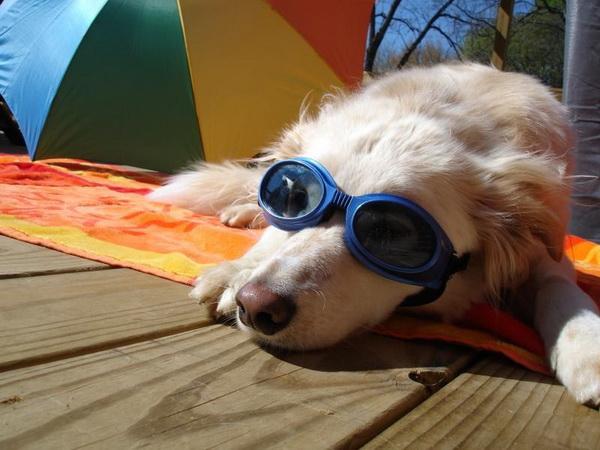 Собака лежит под зонтом