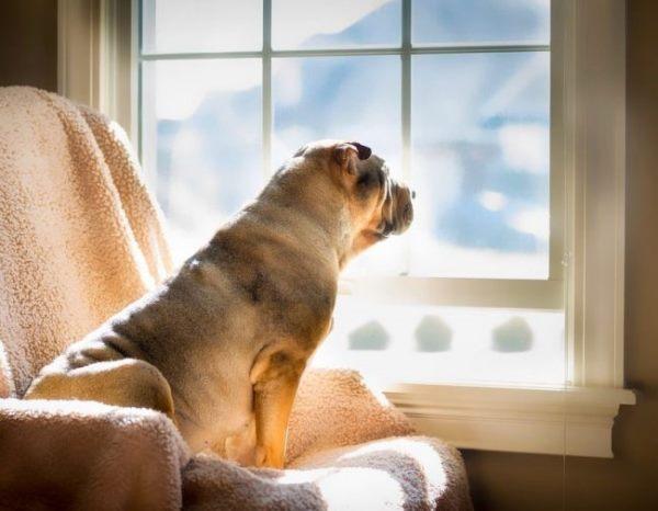 Собака сидит в кресле и смотрит в окно