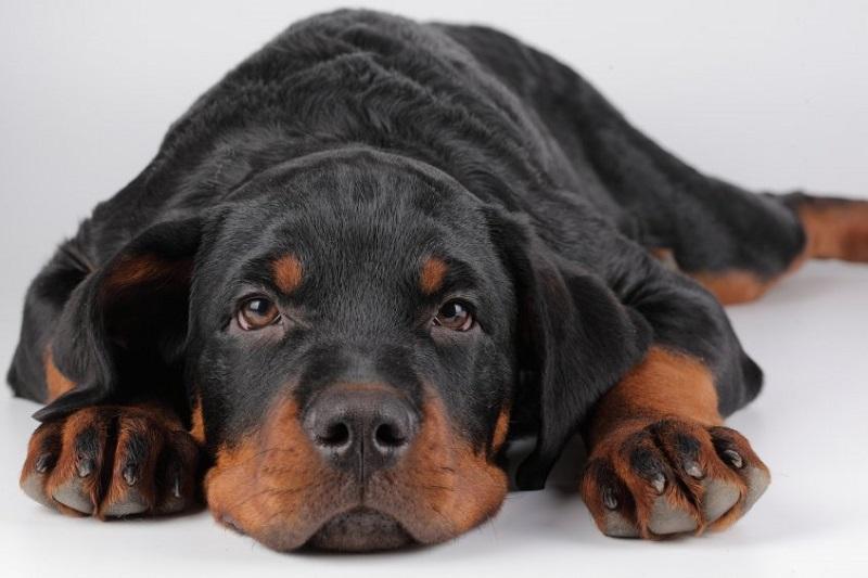 Собака с грустным взглядом