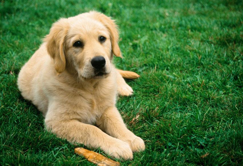 Здоровая собака отдыхает на зеленом лугу
