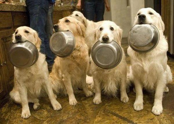Собаки с мисками