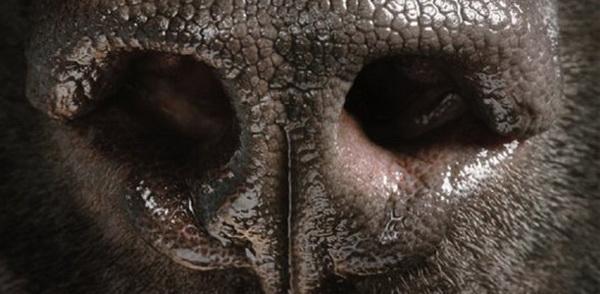 Сопливый собачий нос