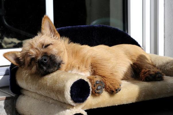 Спит на своем диванчике
