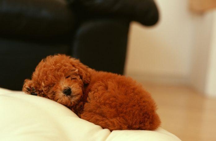 Спящая на пуфе собака