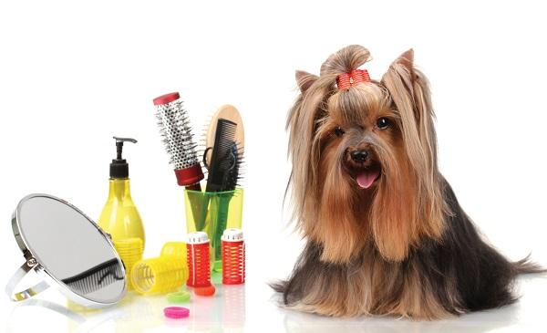 Красиво подстриженная собачка и инструменты для грумминга