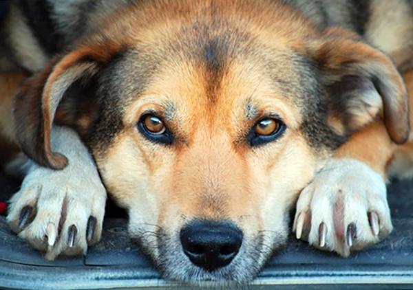 Портрет грустной собаки
