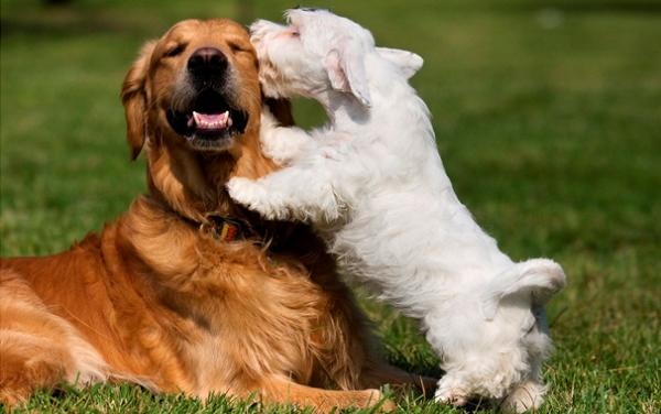 Что такое течка у собак