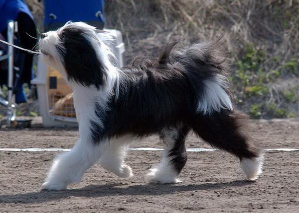 Пес красиво бежит