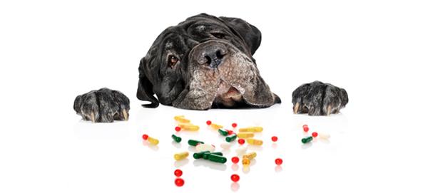 Собака смотрит на таблетки