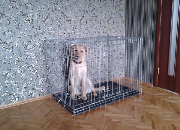 Клетка-вольер в квартире