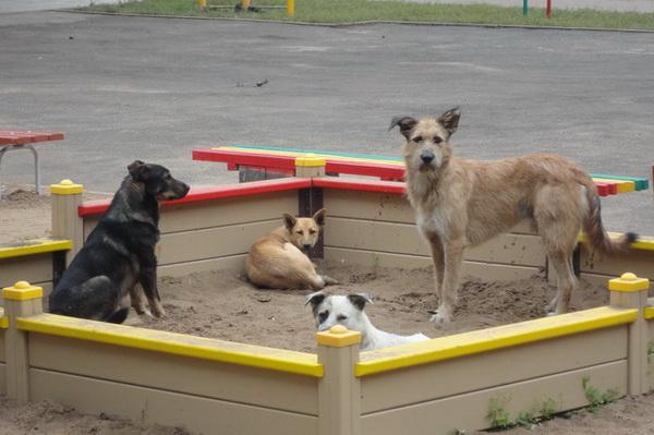 Собаки устроились в песочнице