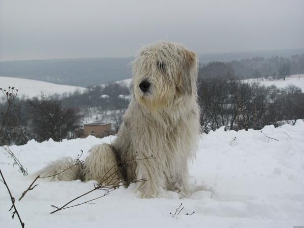 Южак на снегу