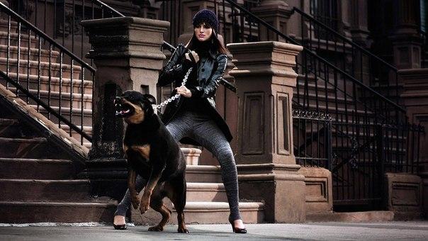 Пес защищает хозяйку