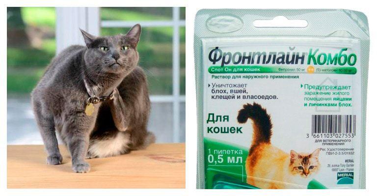 Фронтлайн для кошек