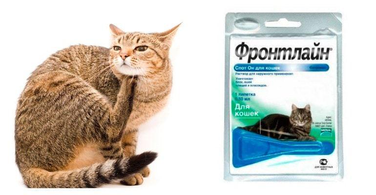 фронтлайн для кошек описание