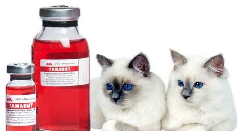 Особенности лечение кошек
