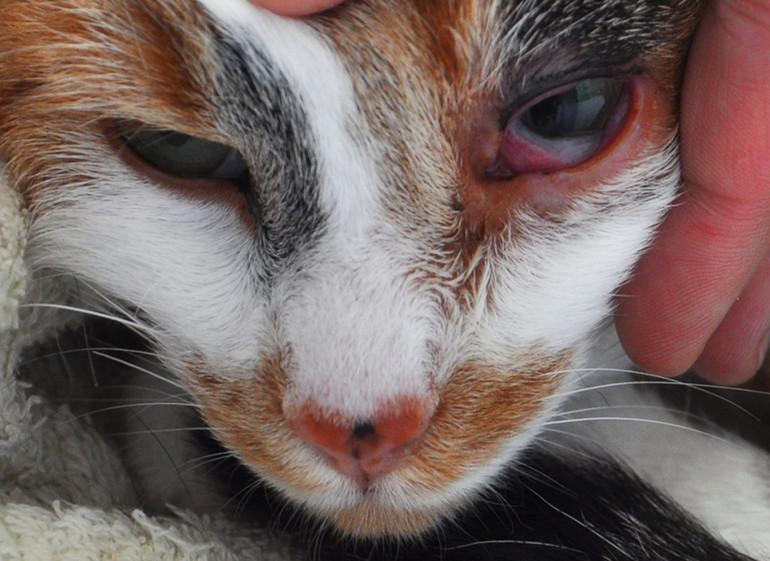 Борьба с патологиями у кошек