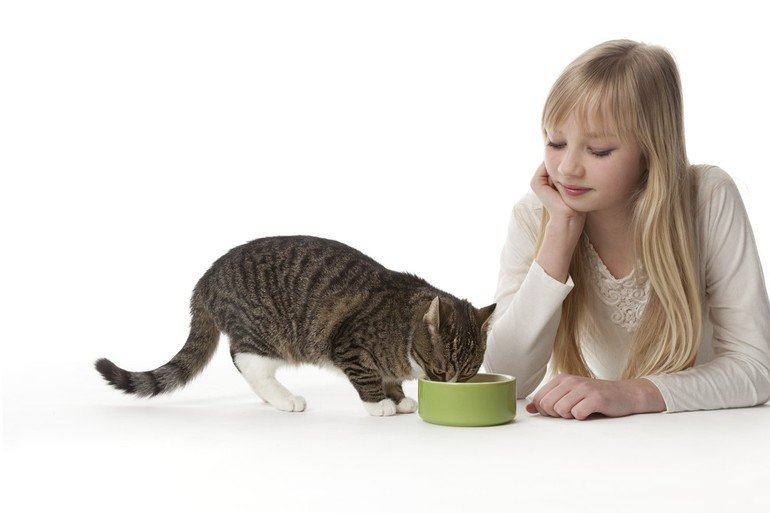 Правильное питание домашней кошки