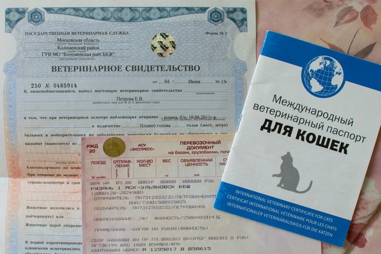 Сертификат на кота