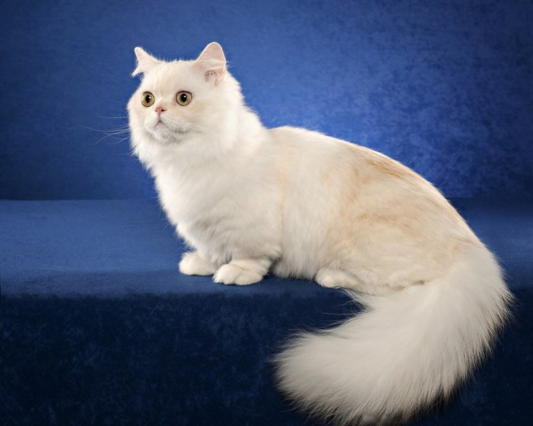 Наполеон кот